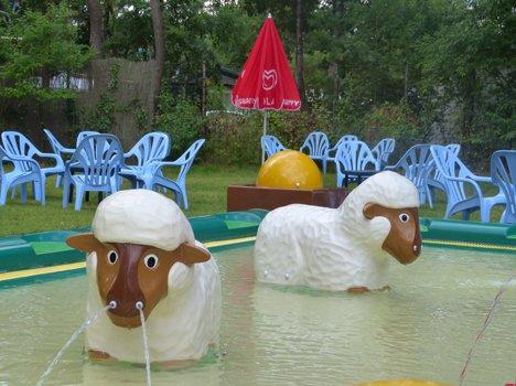 9711-sheep-3